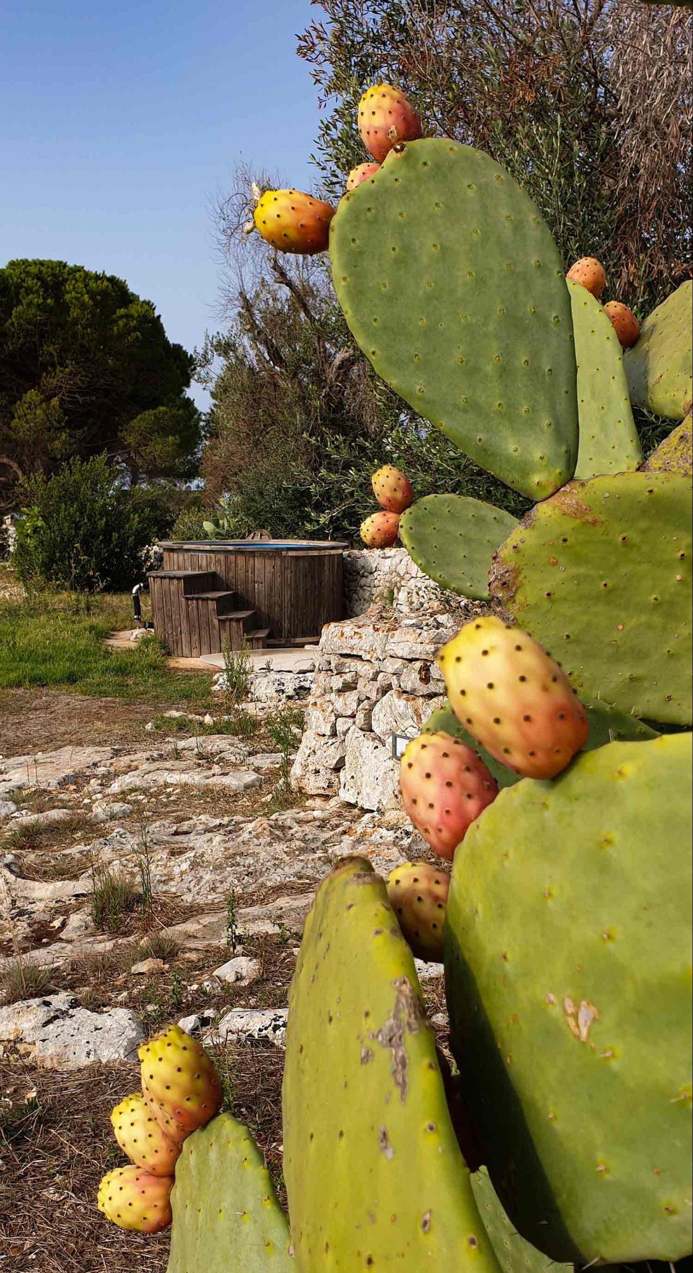 Cactus Vasca idromassaggio